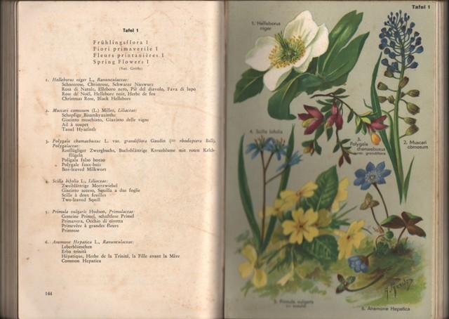 """Flora des Südens d.h. """"Insubriens"""" des südlichen Tessins und Graubündens und des Gebietes der oberitalienischen Seen (Langensee bis und mit Gardasee)."""