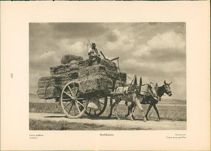 Kupfertiefdruck : Calabrien - S. Severina - Castello - Strohkarren. Landschaftsbild