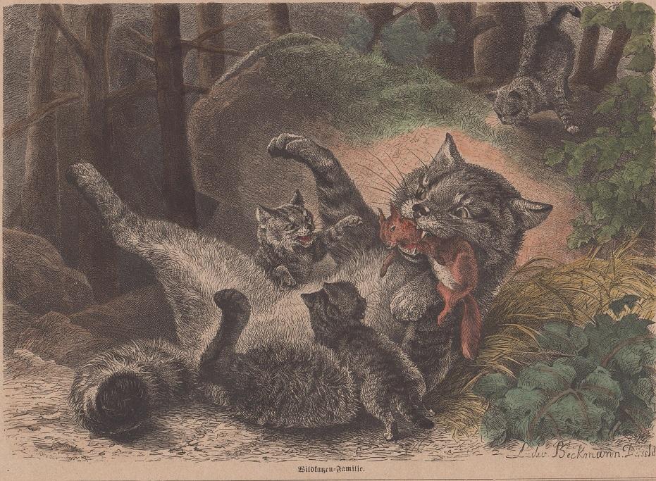 kol. Holzstich - Wildkatzen-Familie Holzstich gezeichnet v. Ludwig Beckmann