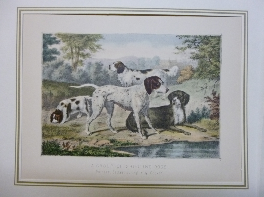 Hunting - A Group of shooting Dogs Lithographie Jagd Jagdhund Jäger Pointer, Setter, Springer and Cocker