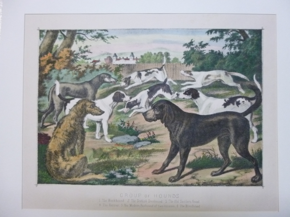 Hunting - A Group Hounds Dogs Lithographie Hund