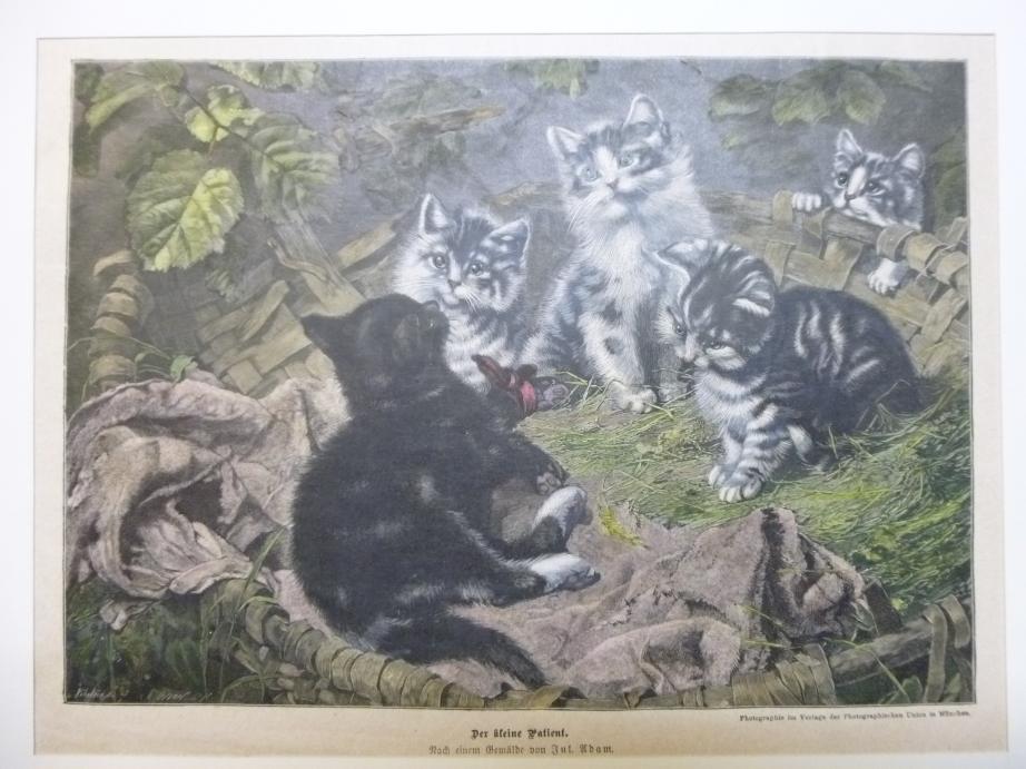 """""""Der kleine Patient"""", Katzenkinder in einem Korb Katzen Holzstich nach Jul. Adam,"""