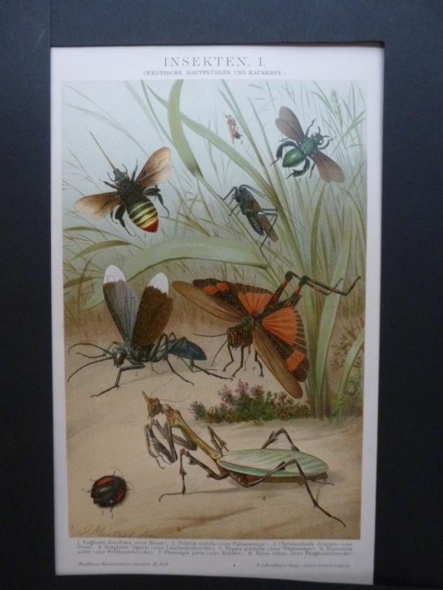 Org Chromolithographie Insekten 1 Schmetterlinge und Käfer Brockhaus Konversations- Lexikon