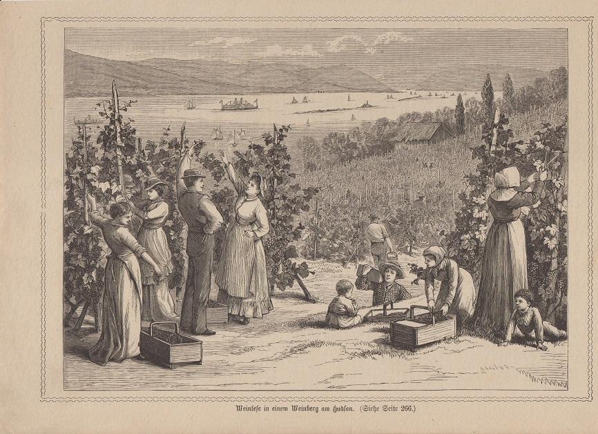 Wein - Weinlese in Weinberg am Hudson Holzstich