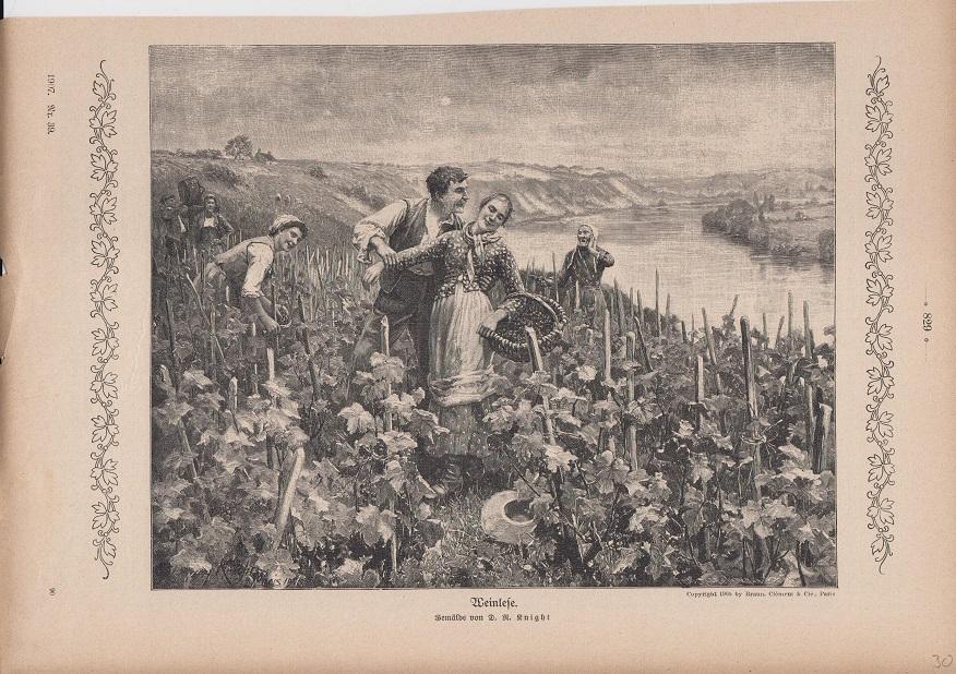 Wein - Weinlese Holzstich Gemälde von D. R. Knight