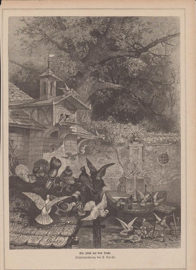orig. Holzstich Ein Idyll auf dem Dache - Tauben Originalzeichnung von F. Specht