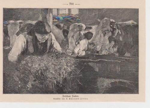 Orig. Holzstich Kühe - Frisches Futter Gemalt von R. Schramm-Zittau
