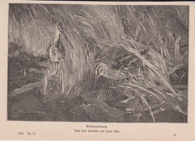 Orig. Holzstich: Bekassinen. Nach dem Gemälde von Ernst Otto.