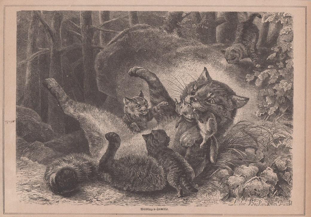 Orig. Holzstich: Wildkatzen - Familie.