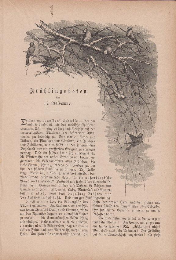 Orig. Holzstich: Frühlingsboten. Text illustriert mit Holzstichen. Seiten 101 - 106. 4 Stiche. Von A. Baldamus.