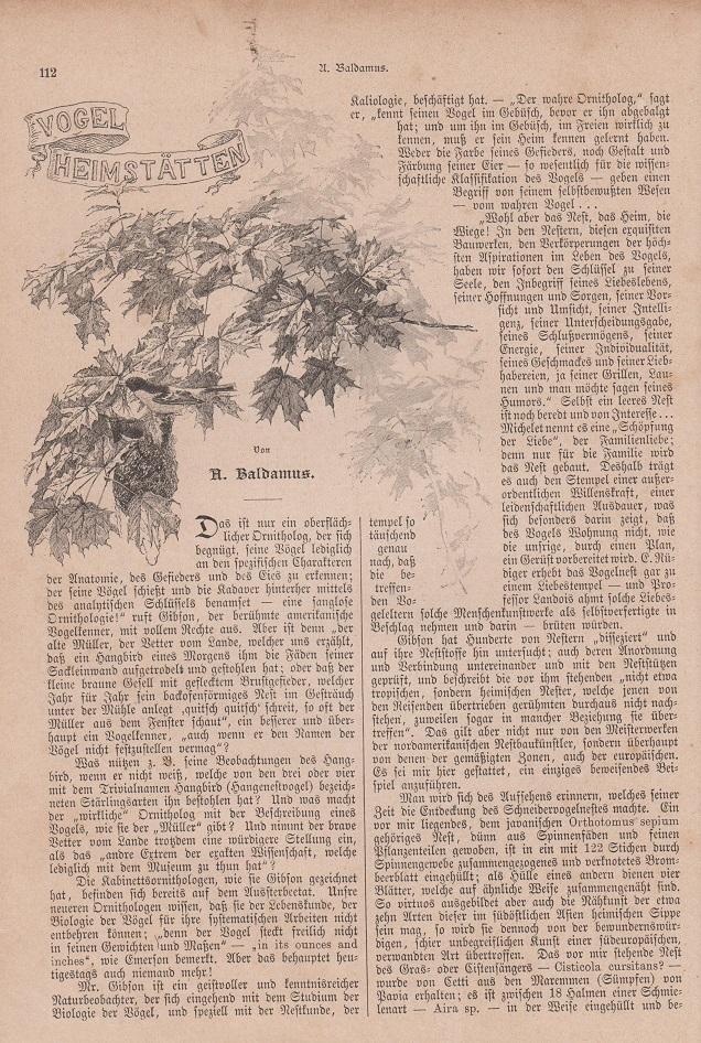 Orig. Holzstich: Vogelheimstätten. Vom Schmuggel. Text illustriert mit Holzstichen. Seiten 112 - 122. 12 Stiche unterschiedlicher Größe. Von A. Baldamus. Von Oskar Klaußmann.