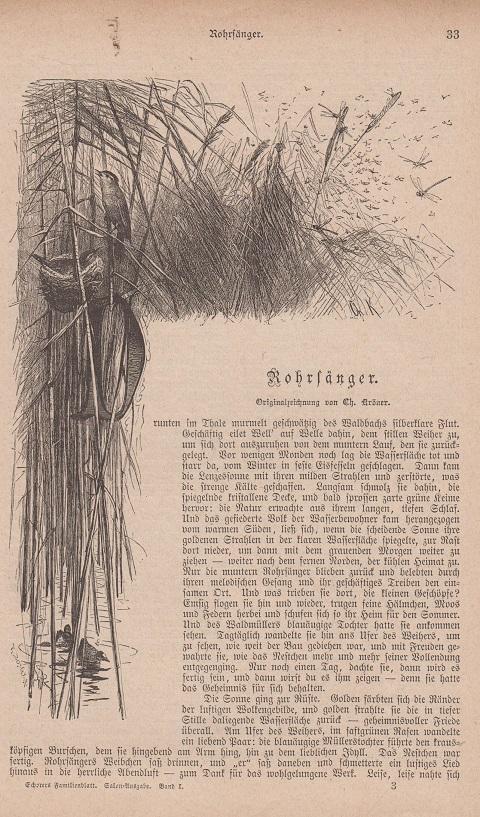 Orig. Holzstich: Rohrsänger. Mit Beitext. Originalzeichnung von Ch. Kröner.