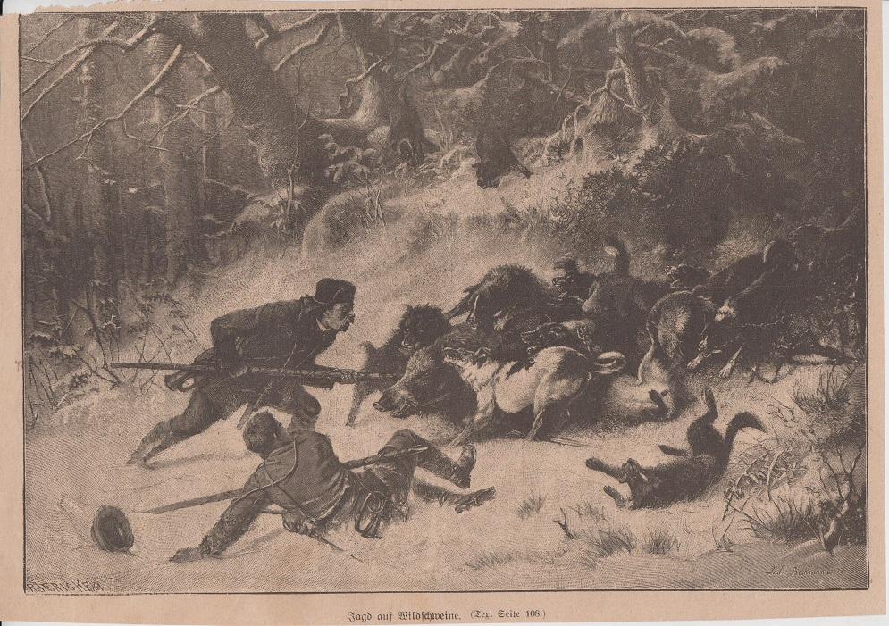 Orig. Holzstich: Jagd auf Wildschweine.
