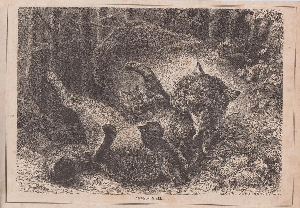 Orig. Holzstich: Wildkatzen-Familie. Ludwig Beckmann Düsseldorf.