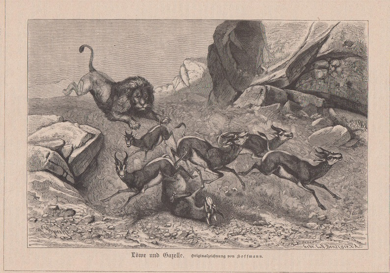 Orig. Holzstich: Löwe und Gazelle. Originalzeichnung von Hoffmann.
