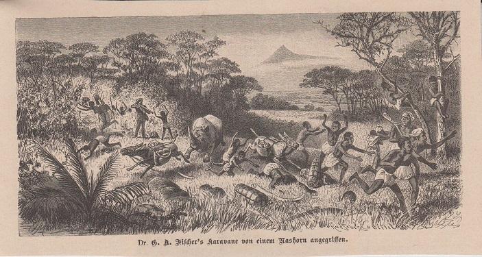 Orig. Holzstich: Dr. G. A. Fischer's Karavane von einem Nashorn angegriffen.