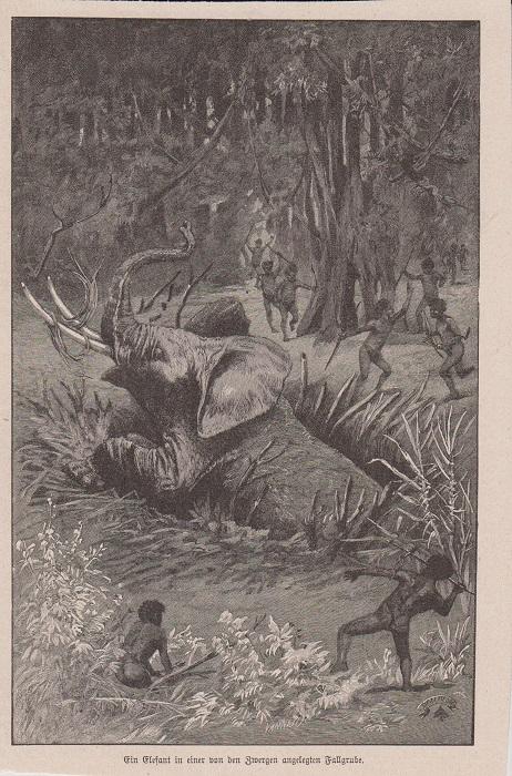 Orig. Holzstich: Ein Elefant in einer von den Zwergen angelegten Fallgrube.