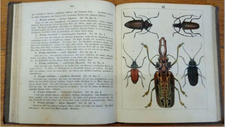 Käferbuch - Allgemeine und specielle Naturgeschichte der Käfer, mit vorzüglicher Rücksicht auf die europäischen Gattungen. Nebst der Anweisung, sie zu sammeln, zuzubereiten und aufzubewahren, mit 1315 colorierten Abbildungen. Erstauflage, EA