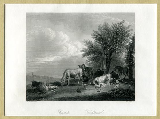 Cattle / Viehstück nach Adriaen van de Velde - Stahlstich mit Keilschnitt-Passepartout