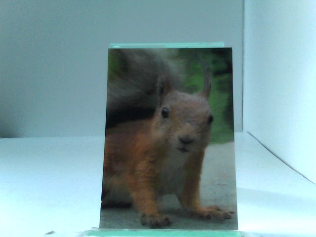 3D Ansichtskarte/Postkarte Eichhörnchen