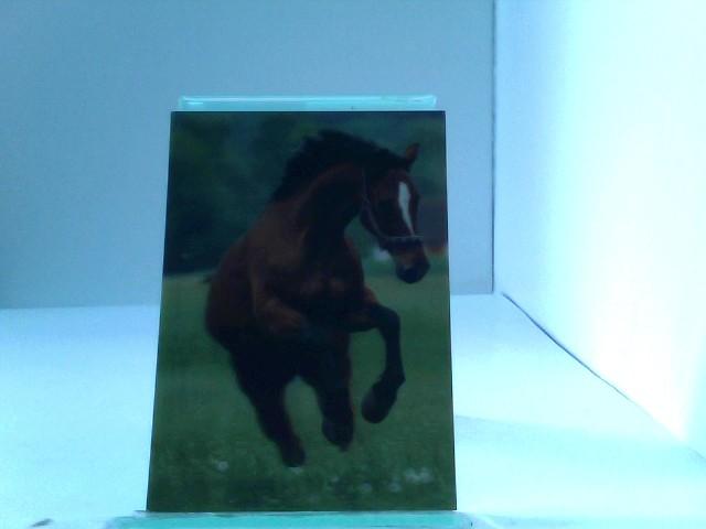 3D Ansichtskarte/Postkarte Verspieltes Perd