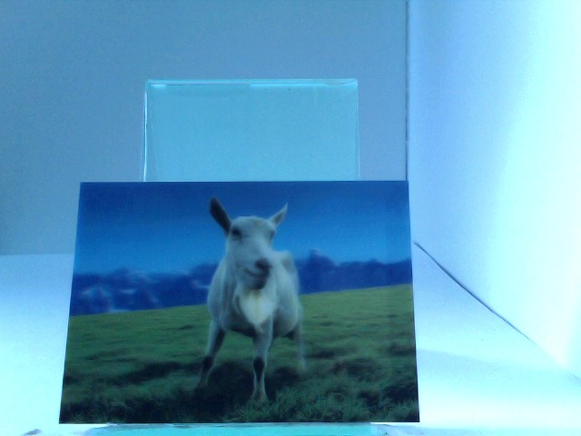 3D Ansichtskarte/Postkarte Saanenziege (schweiz. Hausziege)