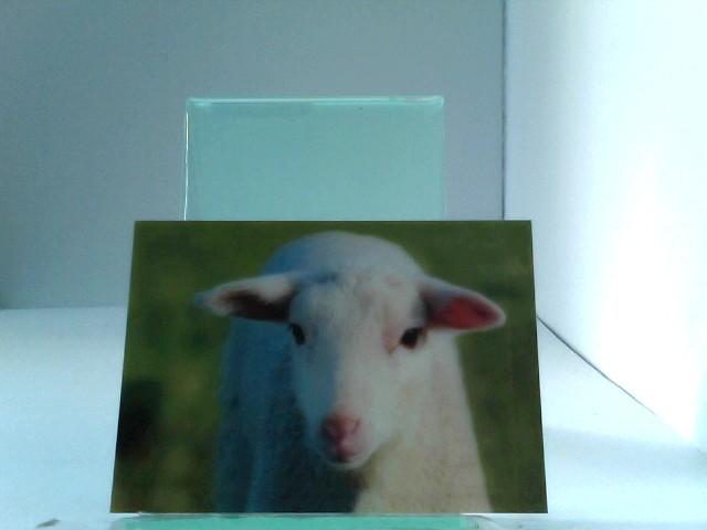 3D Ansichtskarte/Postkarte Lamm