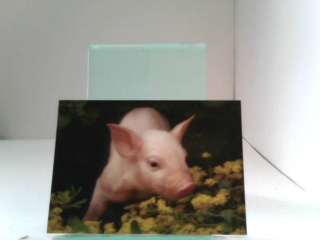 3D Ansichtskarten/Postkarten Glücksschweinchen