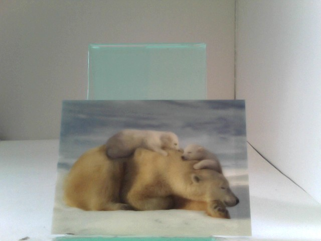 3D Ansichtskarten/Postkarten Eisbärenmutter mit Jungen (Kanada)