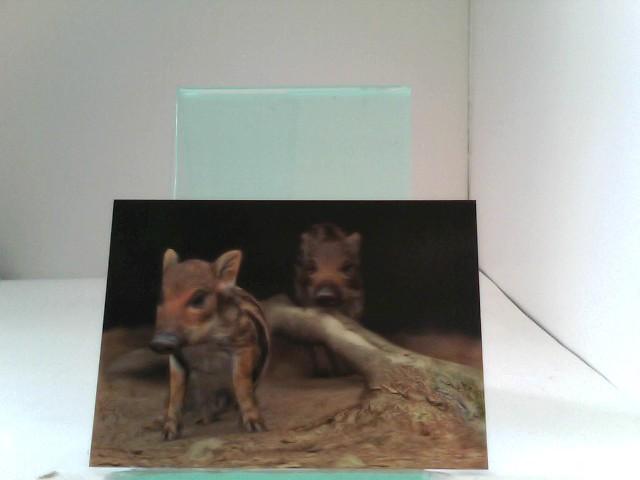 3D Ansichtskarten/Postkarten Frischlinge (Wildschwein-Jungtiere)