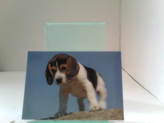 3D Ansichtskarten/Postkarten Beagle