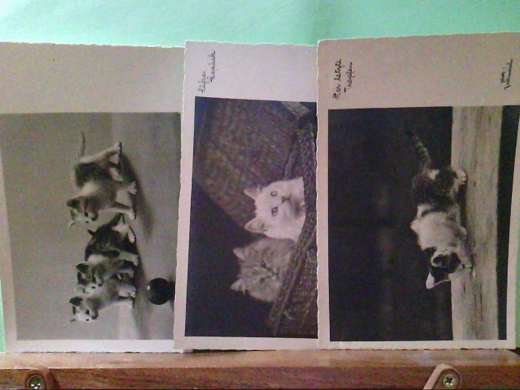 AK Tierreich, 3 Stk. Katzenkarten, Süßes Gepäck, Der letzte Tropfen und Katzen Kinder.