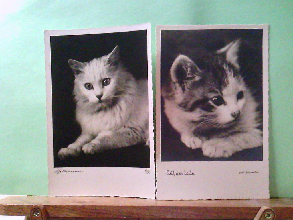 AK Tierreich, 2 Stk. Katzenkarten, Auf der Lauer, Belladonna.
