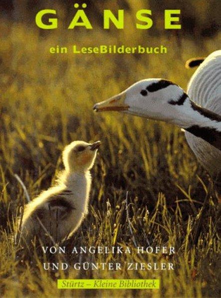 Gänse - ein LeseBilderbuch