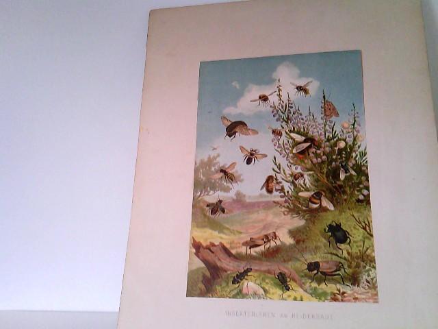 Insektenleben am Heidekraut - Chromolithographie aus Brehms Tierleben, Band VII - X, Niedere Tiere
