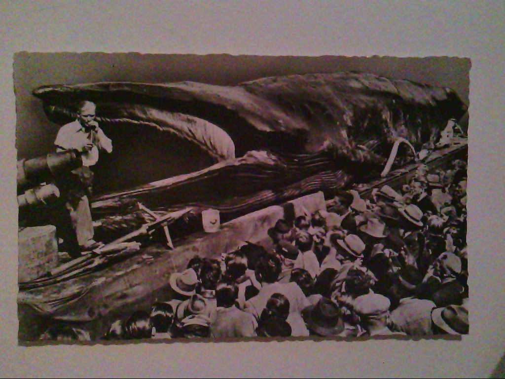 AK. Jonah, the Giant Whale. USA. Orig. Photo. s/w.