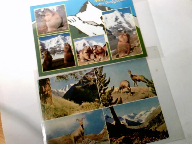 Tierfotografie. Set 2 x Mehrbild AK farbig, ungel. ca 1980. 1 x Murmeltiere am Großgockner. 1 x Piz Plü / Roseg - Gruppe, mit Stempel Diavolezza - Hütte. Tierfotografie. Tieraufnahmen, Murmeltiere, Gemsen, Steinbock.