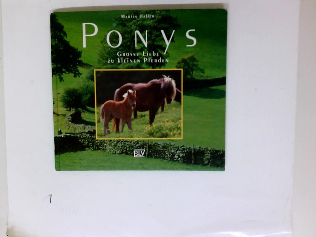Ponys : grosse Liebe zu kleinen Pferden.