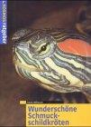 Wunderschöne Schmuckschildkröten.