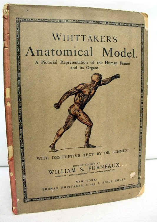 Whittaker´s Anatomical Model A Pictorial Representation of the Human Frame and its Organs 1.Auflage