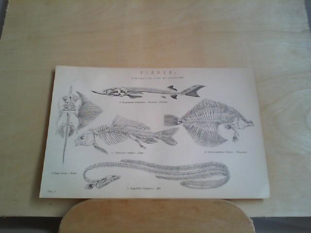 Grafik - FISHES. 1 Grafik-Holzschnitt, aus