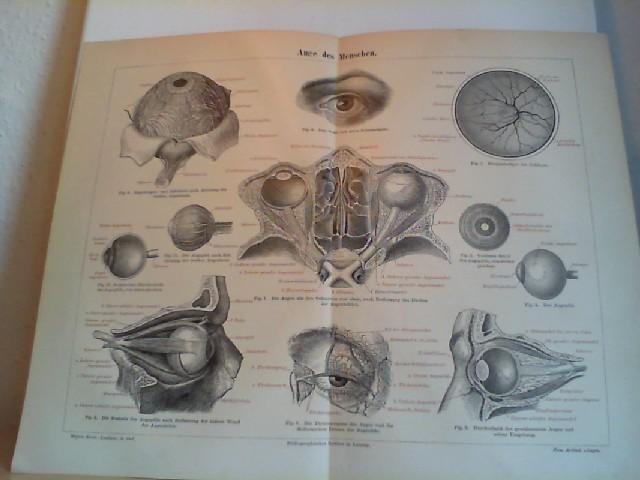 Auge des Menschen.  1 Lithographierte, s/w, einseitige Graphik. Aus Meyers Konversationslexikon 1897. 5. Auflage