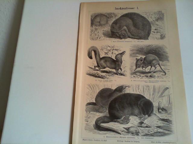 Insektenfresser I und II. 2 Lithographierte, s/w, einseitige Graphiken. Aus Meyers Konversationslexikon 1897. 5. Auflage