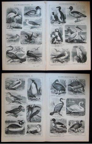 Schwimmvögel I, II, III und IV. Aus: Brockhaus