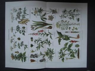 Giftpflanzen. Chromolithografie. Aus Meyers Konversationslexikon