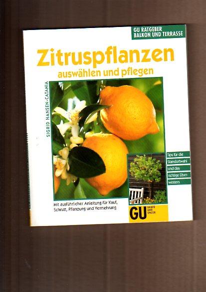 Zitruspflanzen auswählen und pflegen
