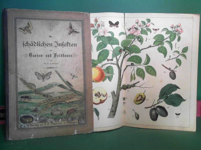 Hofmann, Ernst: Die schädlichen Insekten des Garten- und Feldbaues. 8 Doppelfolio-Tafeln in Farbendruck und Colorit mit erklärendem Text. 1.Auflage,