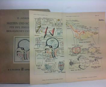 Janson, Otto: Skizzen und Schemata für den zoologisch-biologischen Unterricht - Tafelband mit 75 mehrfarbigen Tafeln. (so vollständig). 1.Auflage,