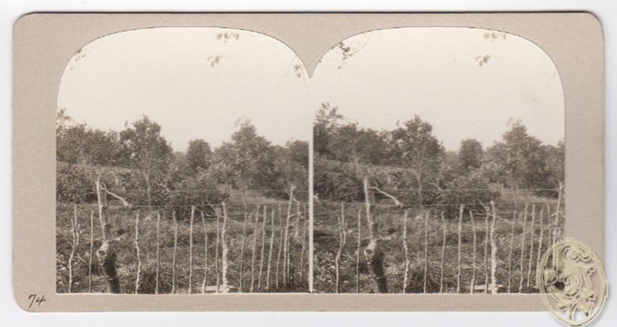 [Bäume, teilweise am Boden liegend, im Vordergrund altertümlicher Zaun m. modernem Stacheldraht. Nr. 74]