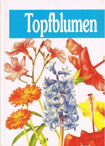 Topfblumen (3811883755)